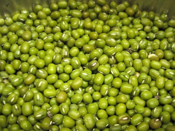 Đậu xanh giúp điều trị bệnh Gout hiệu quả