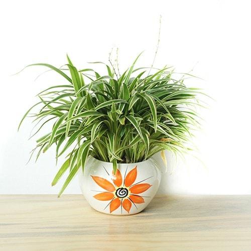 Cây cỏ lan chi biểu trưng cho sức sống mãnh liệt