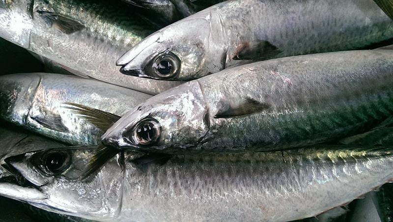 Cá nục giàu chất dinh dưỡng, bà bầu nên bổ sung vào thực đơn