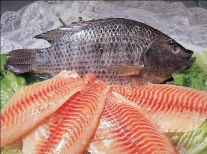 Các loại cá nói chung rất tốt cho sức khỏe phụ nữ có thai
