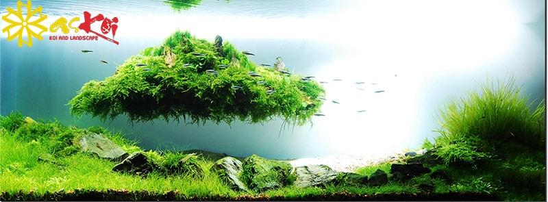 Cây cảnh trong hồ thủy sinh khiến hồ giống với môi trường tự nhiên hơn