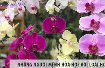 Những người mệnh Hỏa hợp với loài hoa gì?