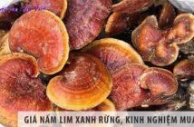 Giá nấm lim xanh rừng là bao nhiêu, kinh nghiệm mua nấm?